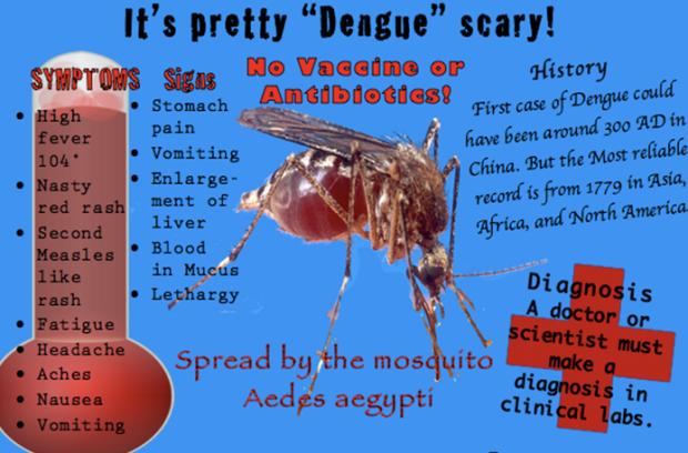Essay about dengue virus life